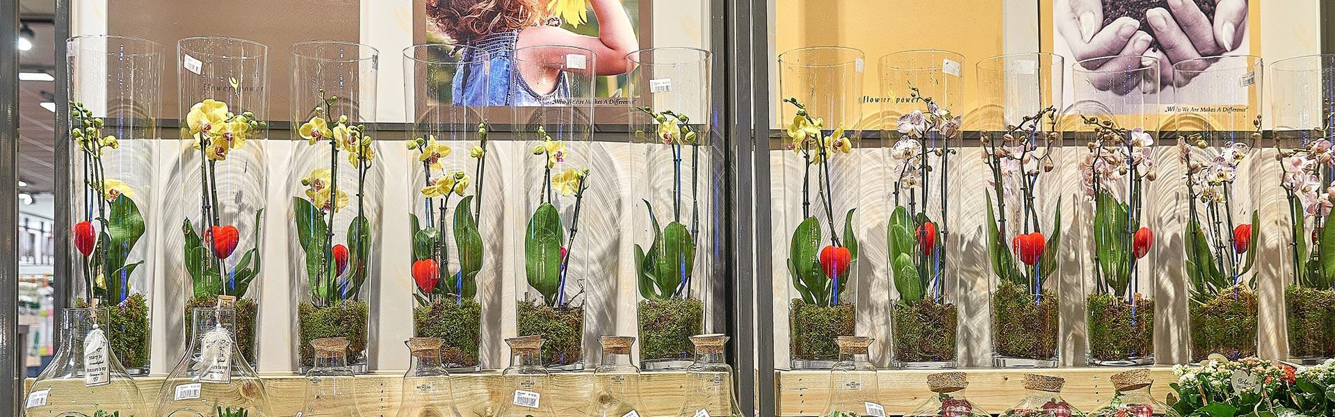 Orchideen als Geschenkidee bei REWE Schorn